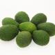 Avocado,MINI, Sorte Hass Kg  Quinta-Anbau