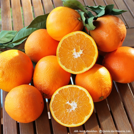Apfelsinen / Navel - Orangen Quinta-Anbau Kg
