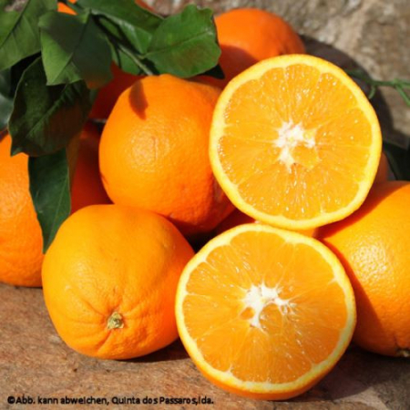 Awesome Oranges, organic, very tasty, Quinta cultivation