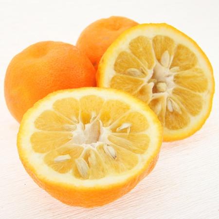 Wildorangen / Bitterorange (laranja brava) Quinta-Anbau Kg
