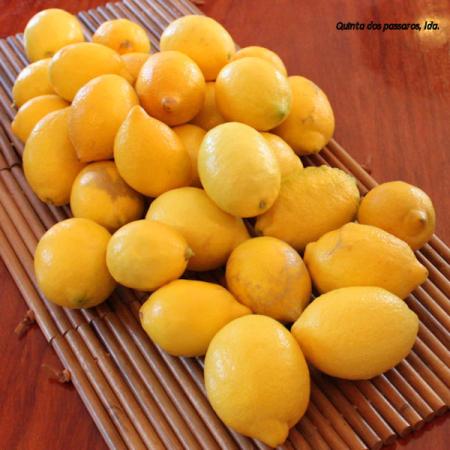 Zitronen  (Limao) Quinta-Anbau Kg