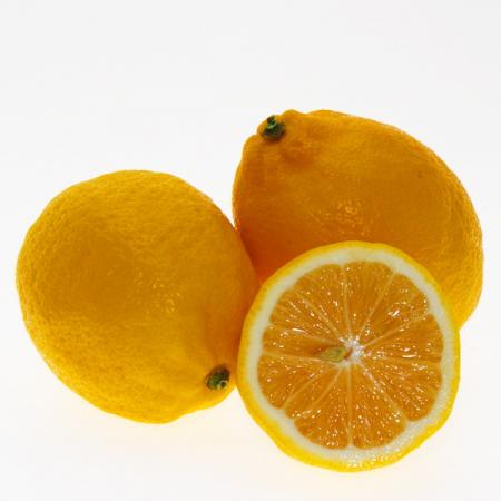Zitrone Meyer; die Gourmetzitrone Quinta-Anbau Kg