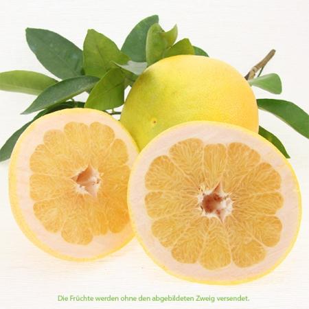 Grapefruit weiß (Toranja branca) Kg Quinta-Anbau