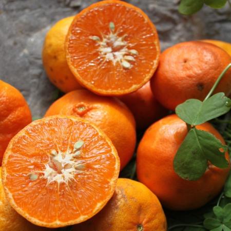 Encore (Tangerine) Quinta-Anbau Kg