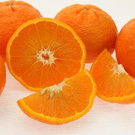 Ortanique (Tangerine)   Quinta-Anbau Kg