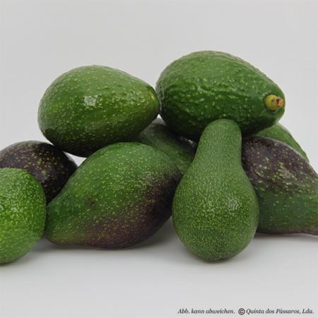 Avocado Wildwuchs (abacate bravo) Quinta-Anbau  kg