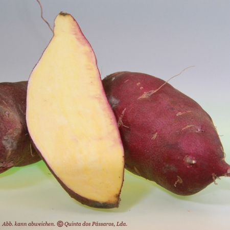 Süßkartoffel--DAS GEMÜSE--verschieden Sorten Kg