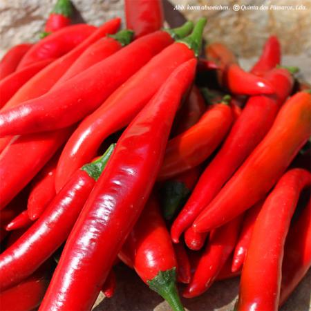 Pepperoni, Chili, frisch, verschiedene Sorten
