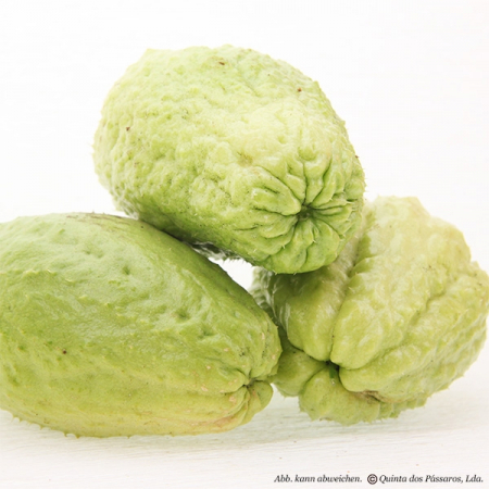 Chayote or Chu Chu, also known as