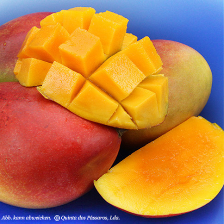 Mango reif geerntet, Brasilien