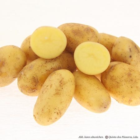 Kartoffeln, junge kleine 35 - 45 mm NEUE Kartoffeln