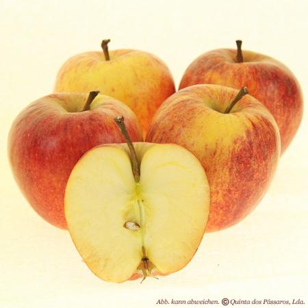 Apfel Royal Gala neue Ernte 4 Stk. Pack