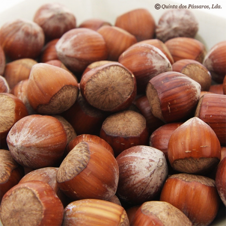 Hazelnuts, whole, raw, organic, Jumbo Hazelnuts 24mm, with nutshell, 500g