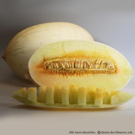 Melone branco  Quinta Anbau, per Stück, KG Preis ab