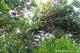 Johannisbrot (Alfarroba, Carob) unbehan. Naturware 500g Quinta-Anbau