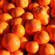 Clementine Sorte: Nova Quinta-Anbau Kg